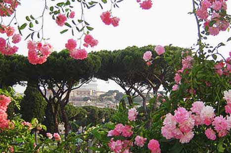 Roma rose
