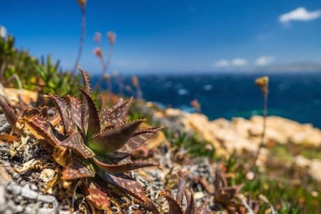 Sardegna 3 pixabay.jpg