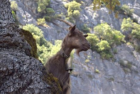 Sardegna asino pixabay.jpg