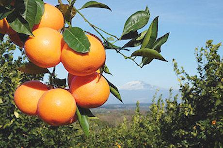 Sicilia arance_etna_N