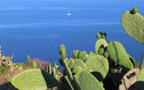 Sicilia cactus mare