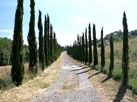 Toscana paesaggio pixabay.jpg