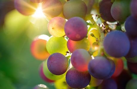 Wine resort: 5 лучших винных курортовИталии