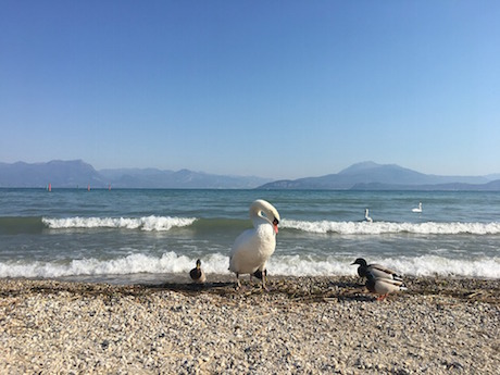 Lago di Garda.jpg