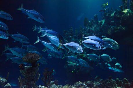 aquarium pixabay.jpg