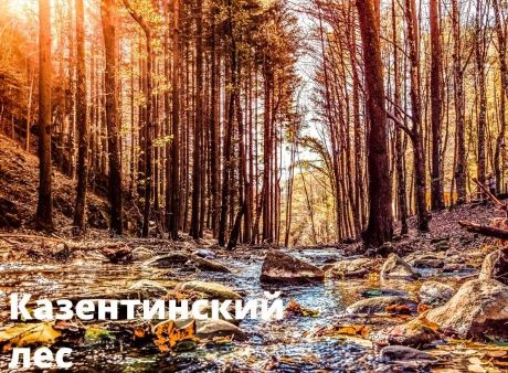 Foreste Casentine