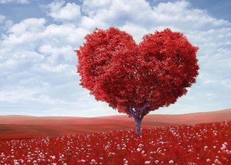Признание в любви по-итальянски: кому говорить «Ti amo», а кому «Ti vogliobene»?