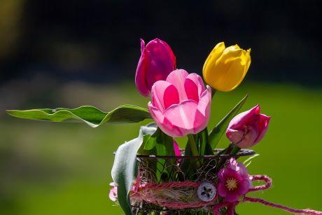 tulipani pixabay